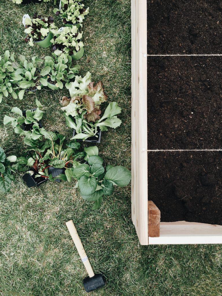 Un Potager En Carré le potager en carrés (square foot garden) - trois fois par jour